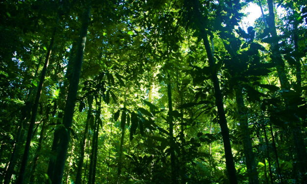 Our Rainforests Are Being Hunted to Death
